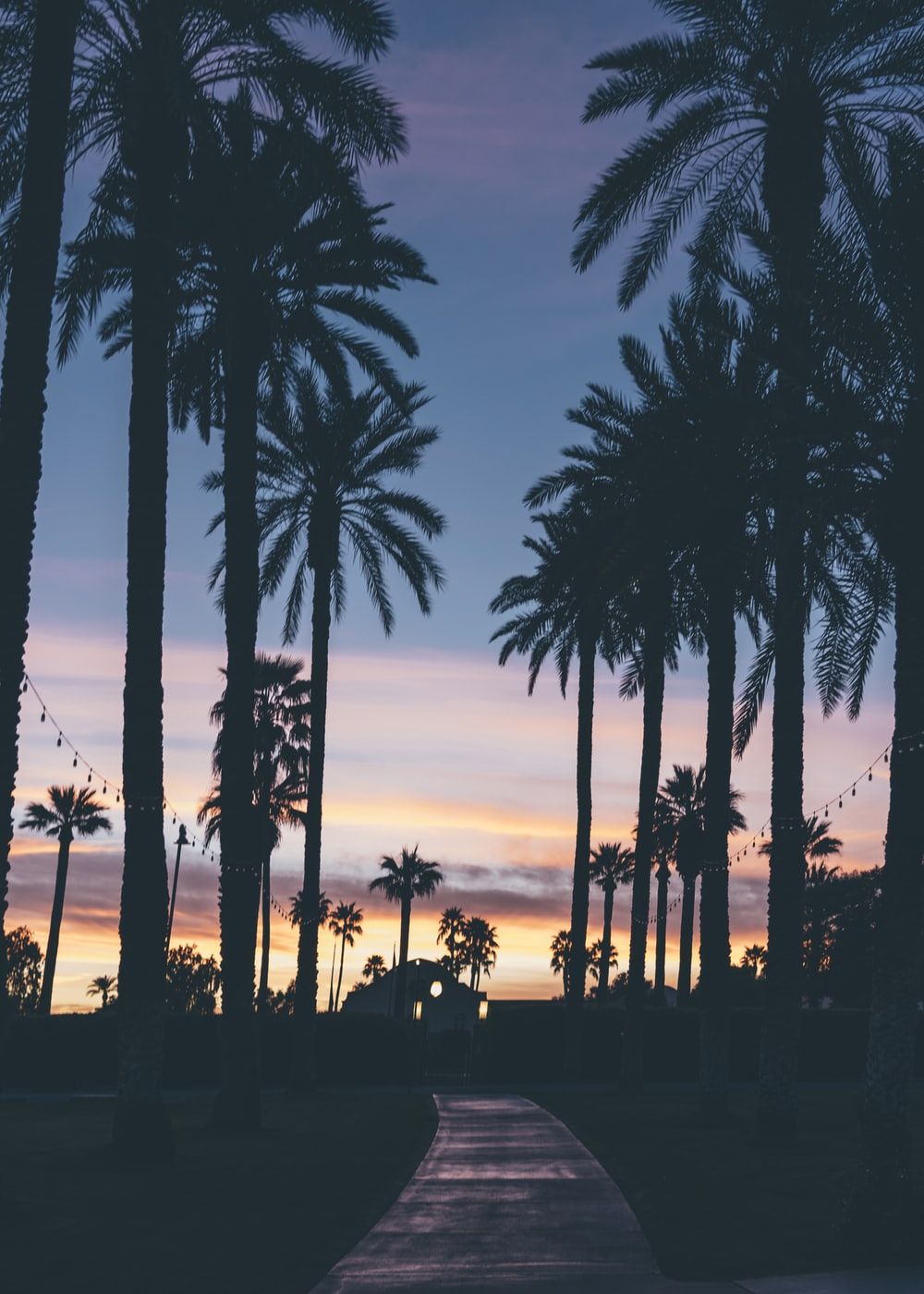silhouette of houses beside palm trees and pathway