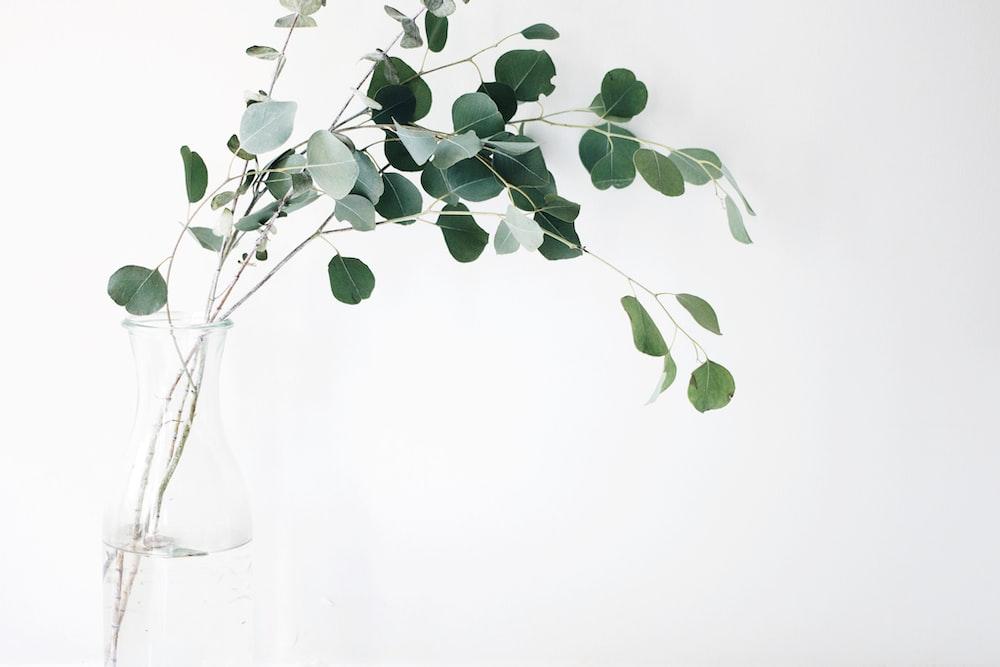 Minimalist Flower Pictures Download Free Images On Unsplash