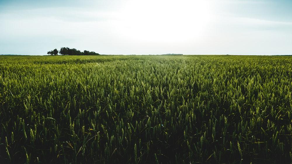 green meadow under clear sky