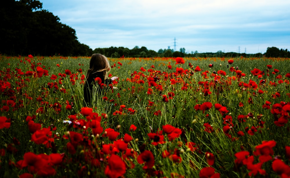 person walking around the red flowers during daytime