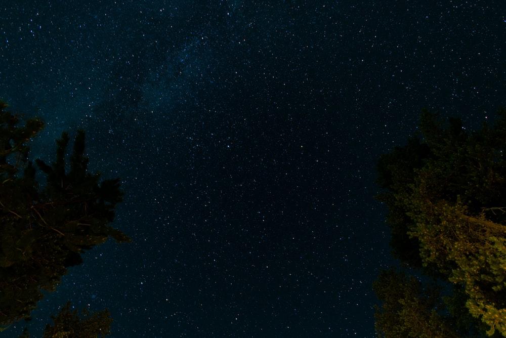 green tree under blue starry sky at night