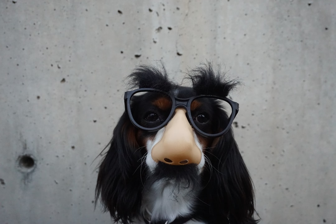 Dog in disguise