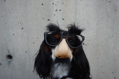 black and white dog with disguise eyeglasses fun zoom background