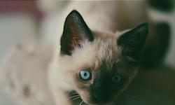 Can Cats Eat Pumpkin?
