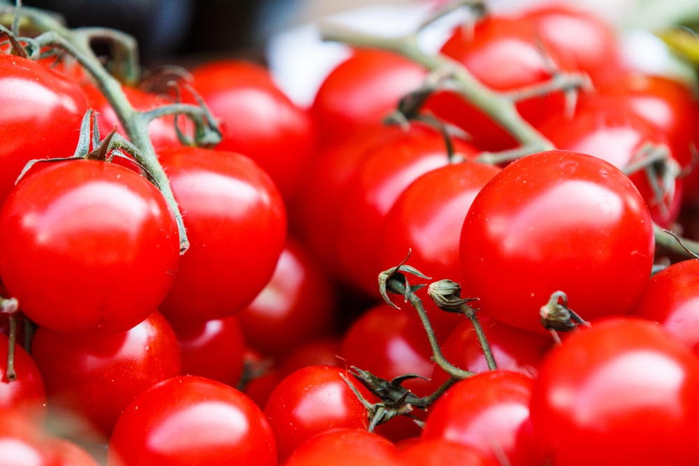 closeup photo of red tomatoes