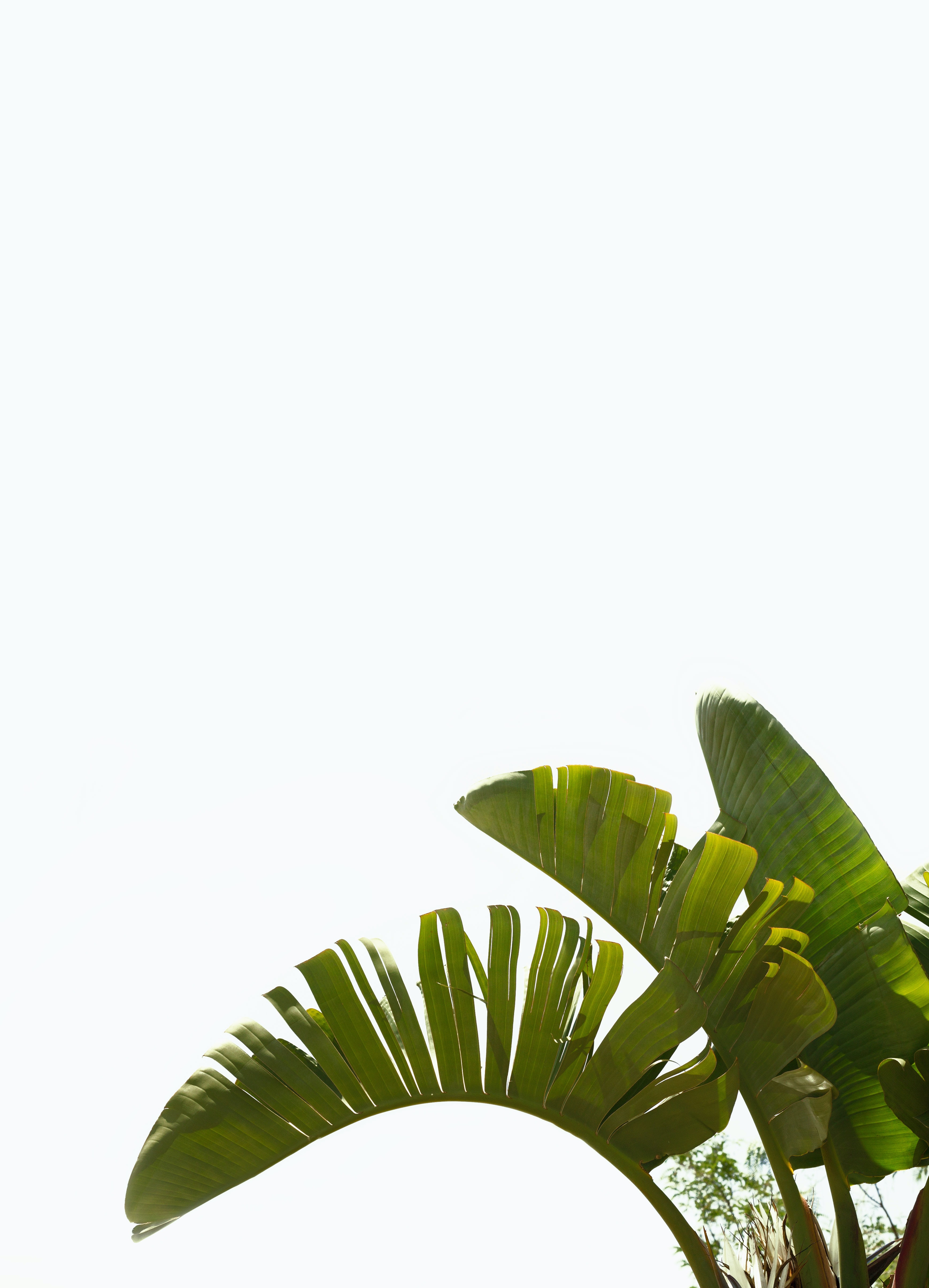 Green leaves on top of a plant under a bright white sky.