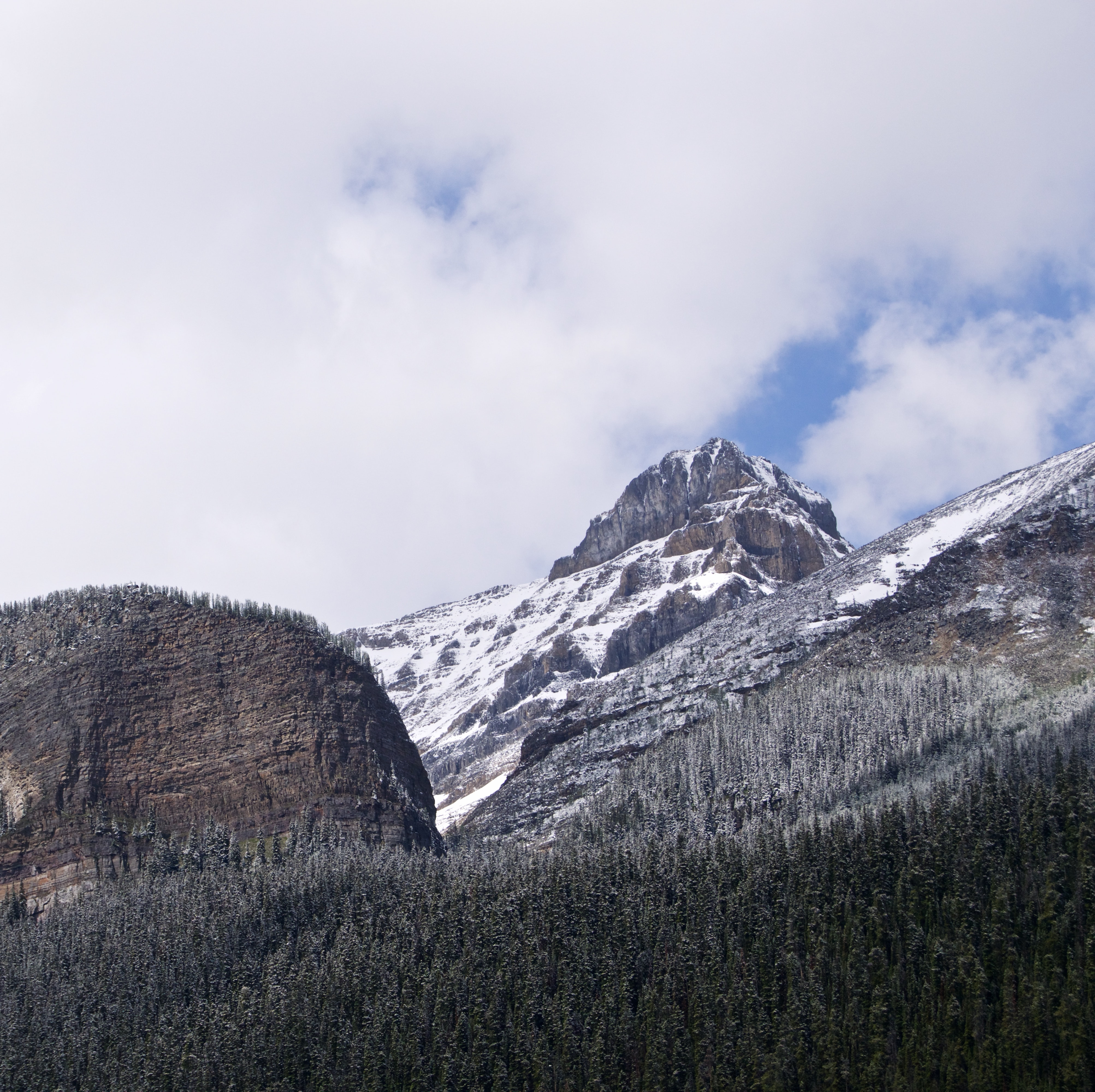 Snowcapped trees on a hill in Canada with a big mountain in the background