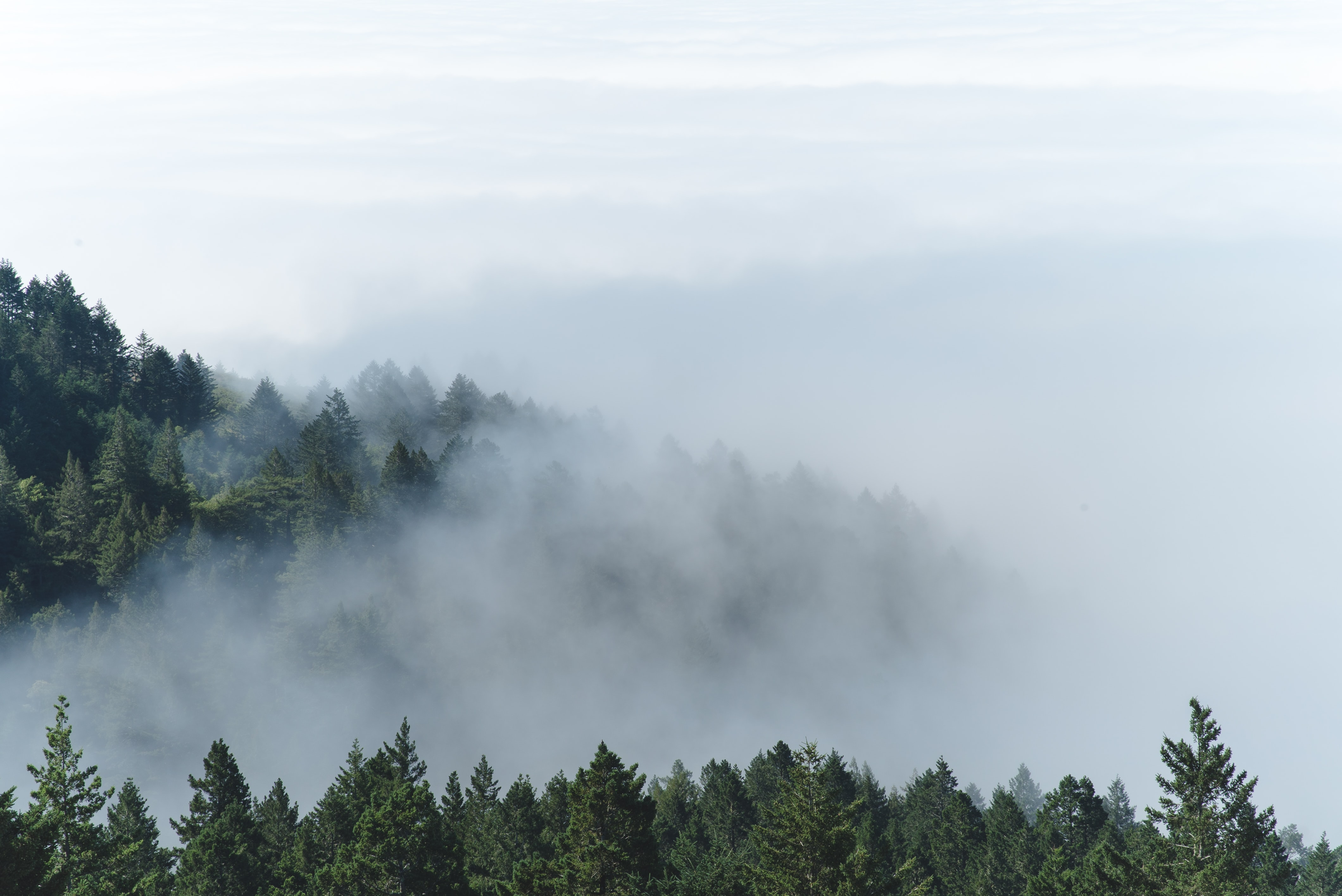 aerial photography of foggy forest