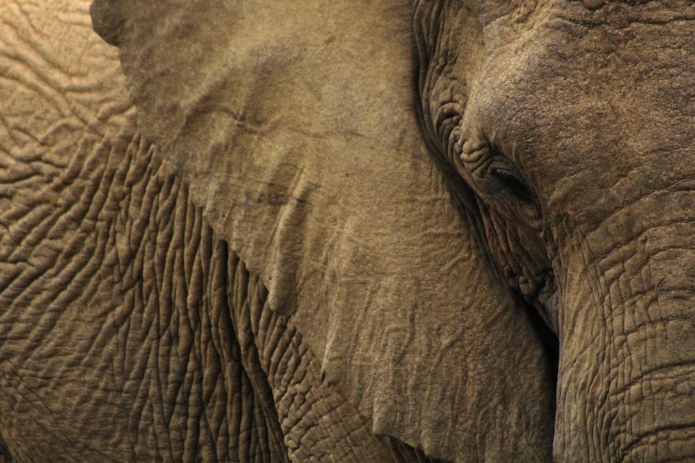 close-up photo of gray elephant