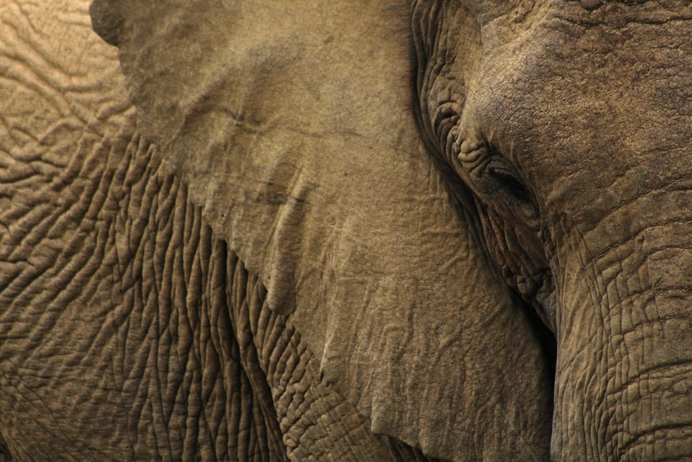 close-up photo of gray elephant