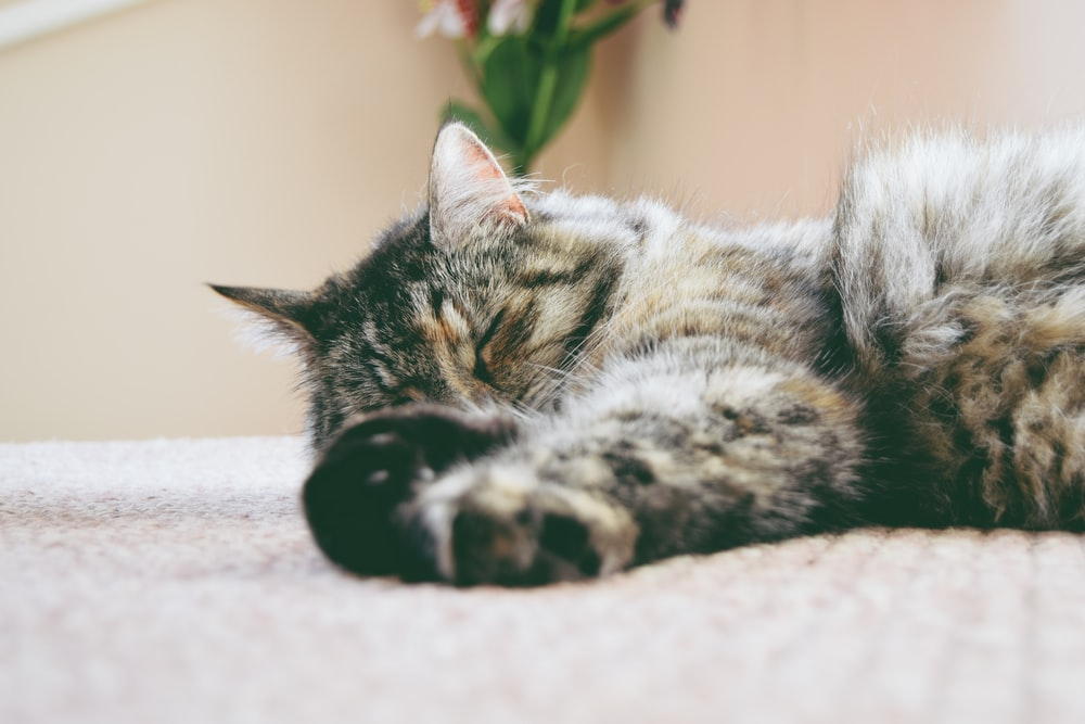 gray cat sleeping on mat