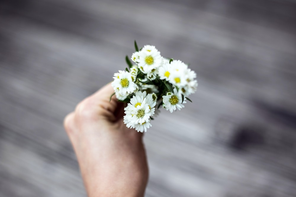 person holding white aster flowers