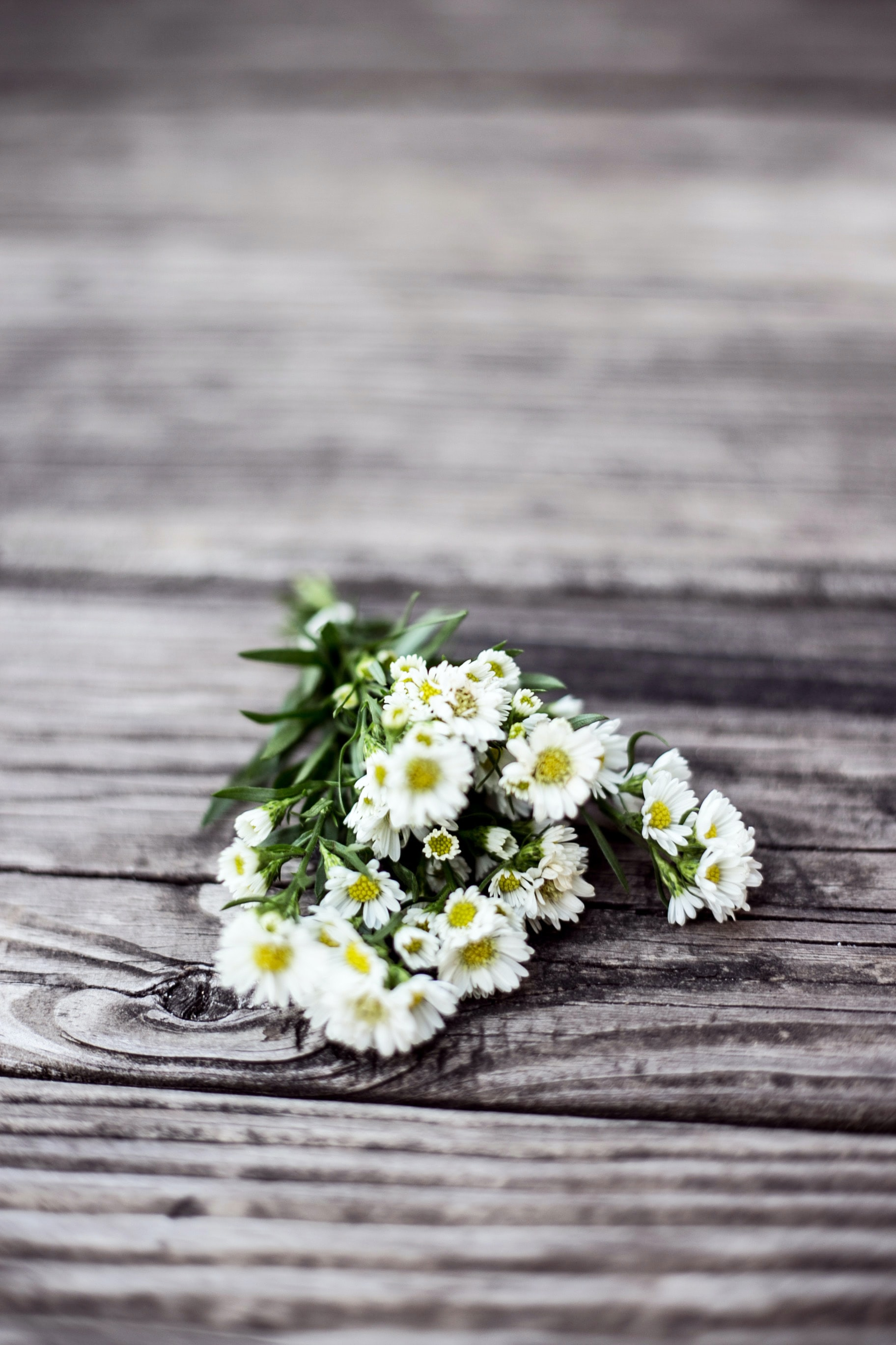white aster flowers on brown wooden dock