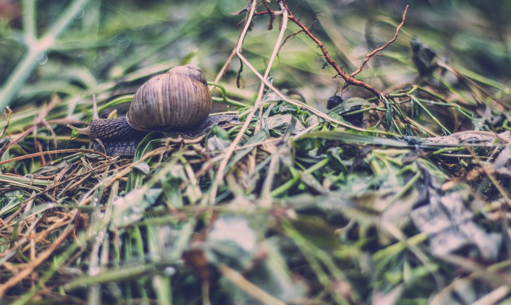 brown snail on green leafed plant