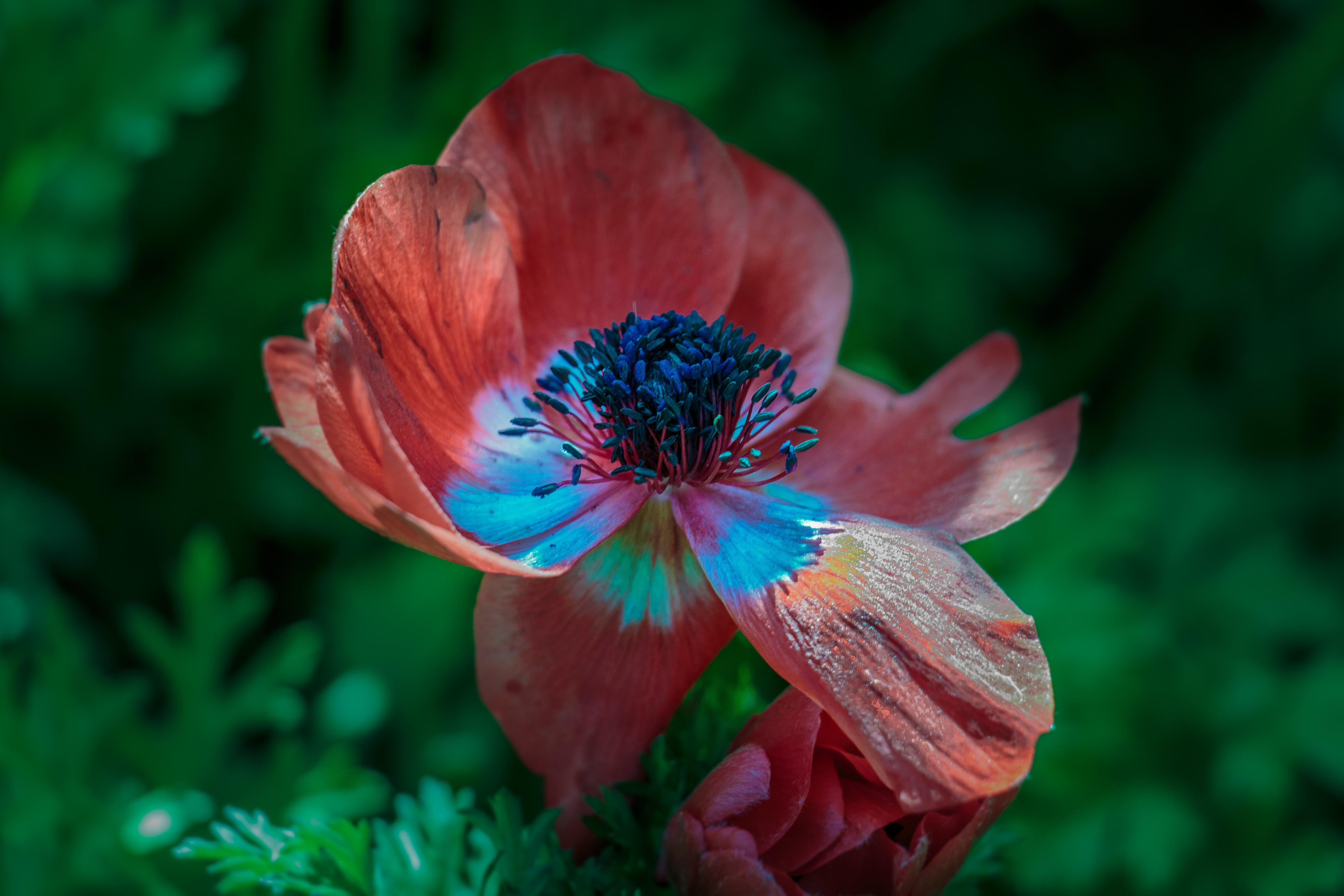 shallow focus photography of red petal flower