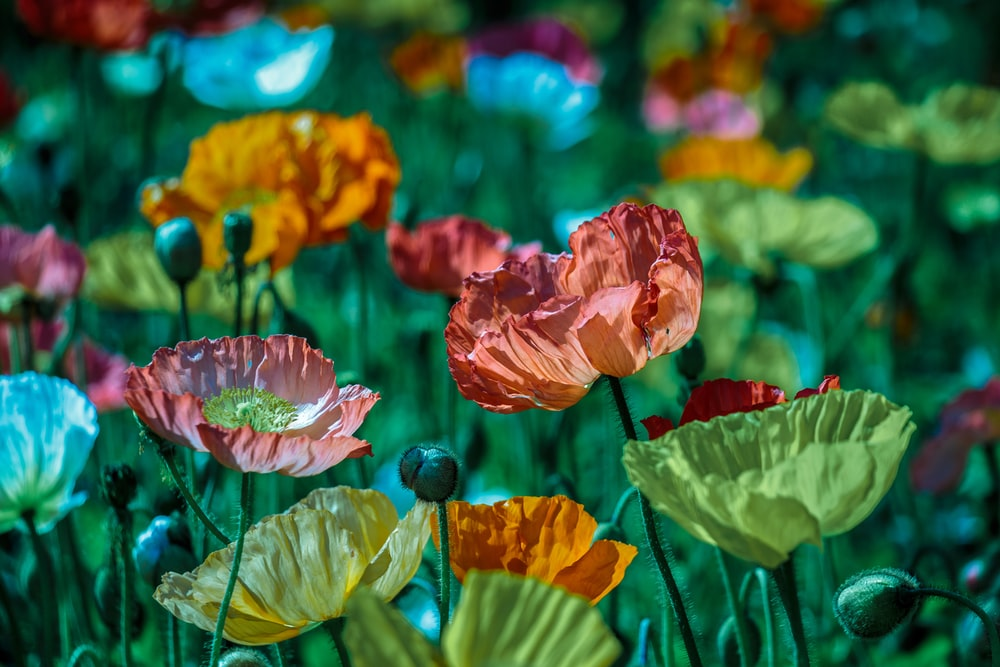 assorted-color flower photography