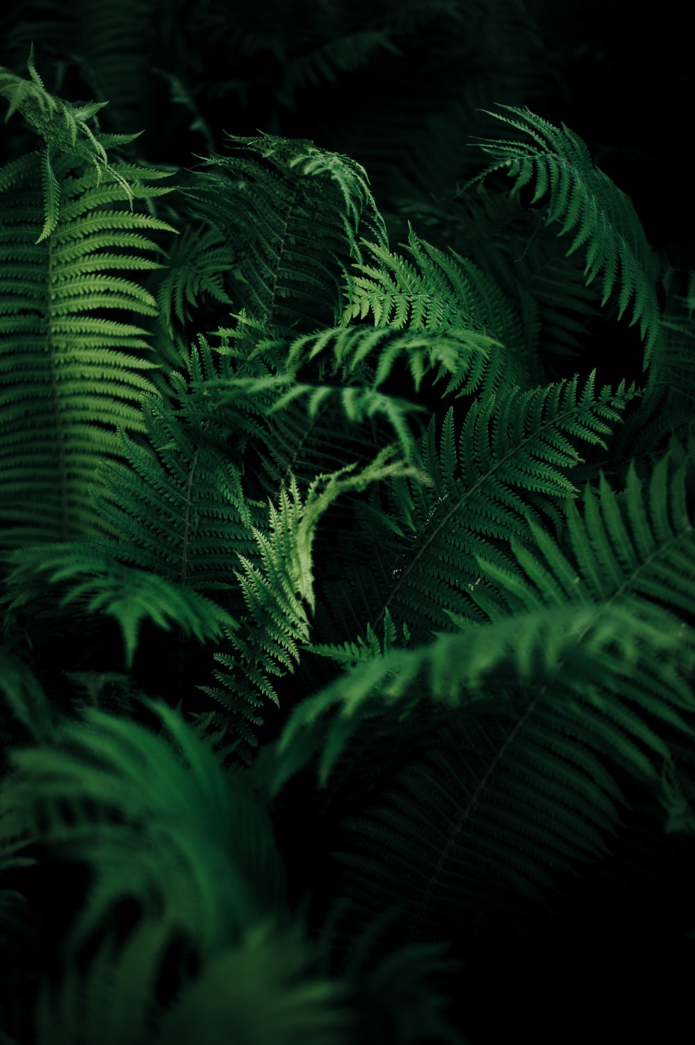green leafed plant