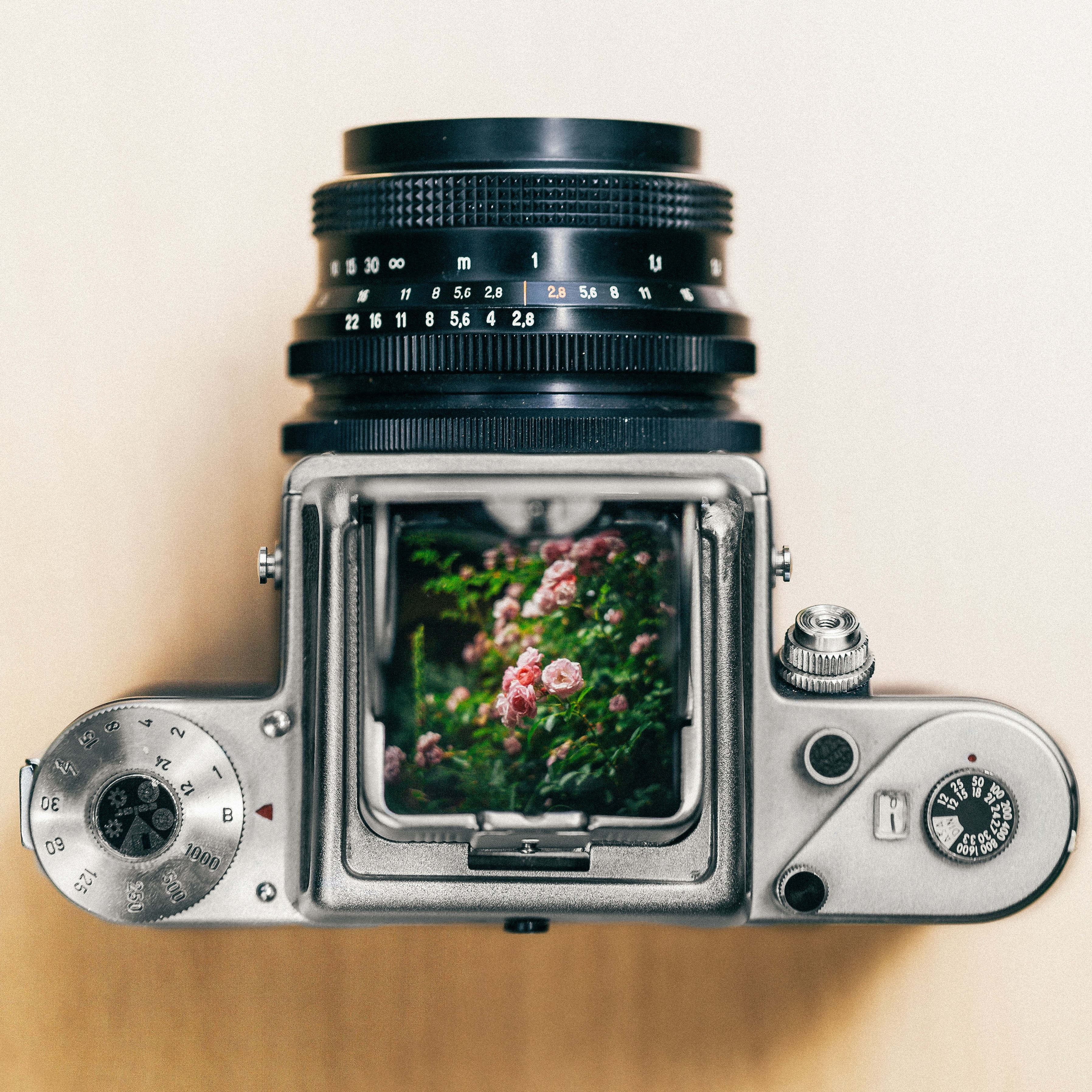 gray and black DSLR camera showing pink petaled flowers