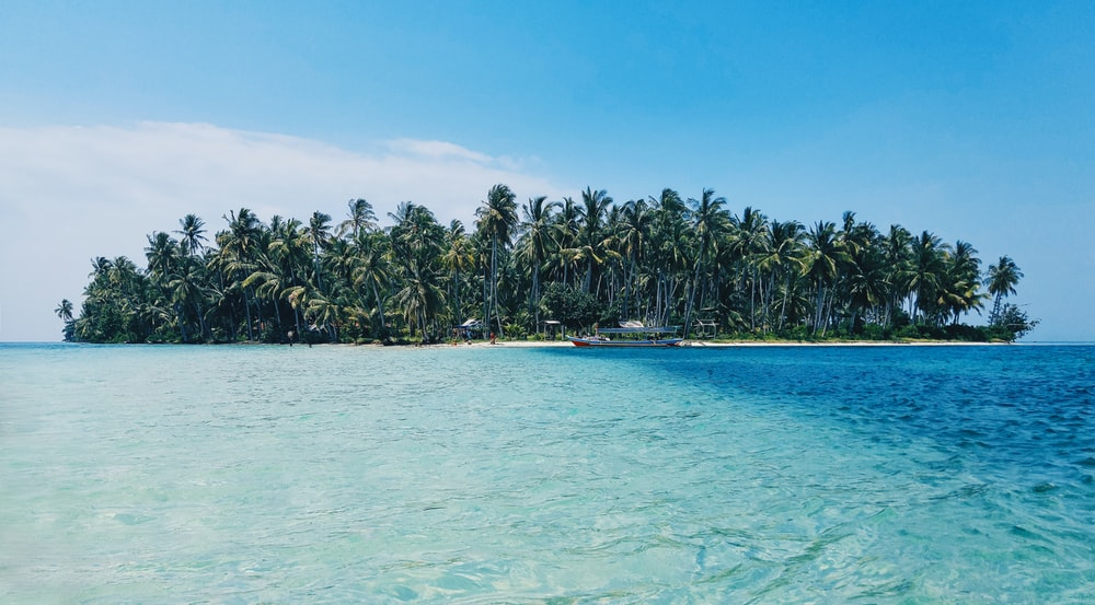 coconut trees on island under blue sky