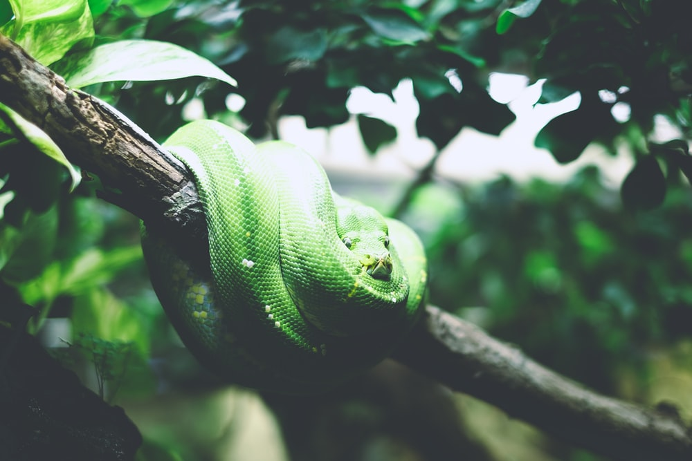 green snake on tree branch