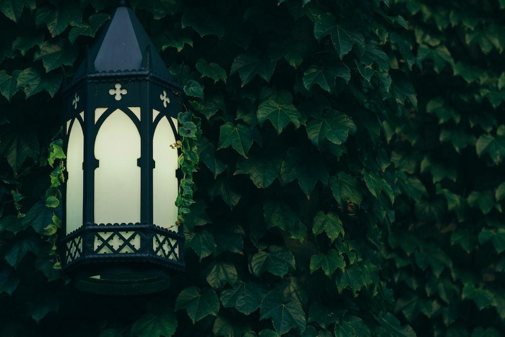 green leaf plant and black metal framed lantern