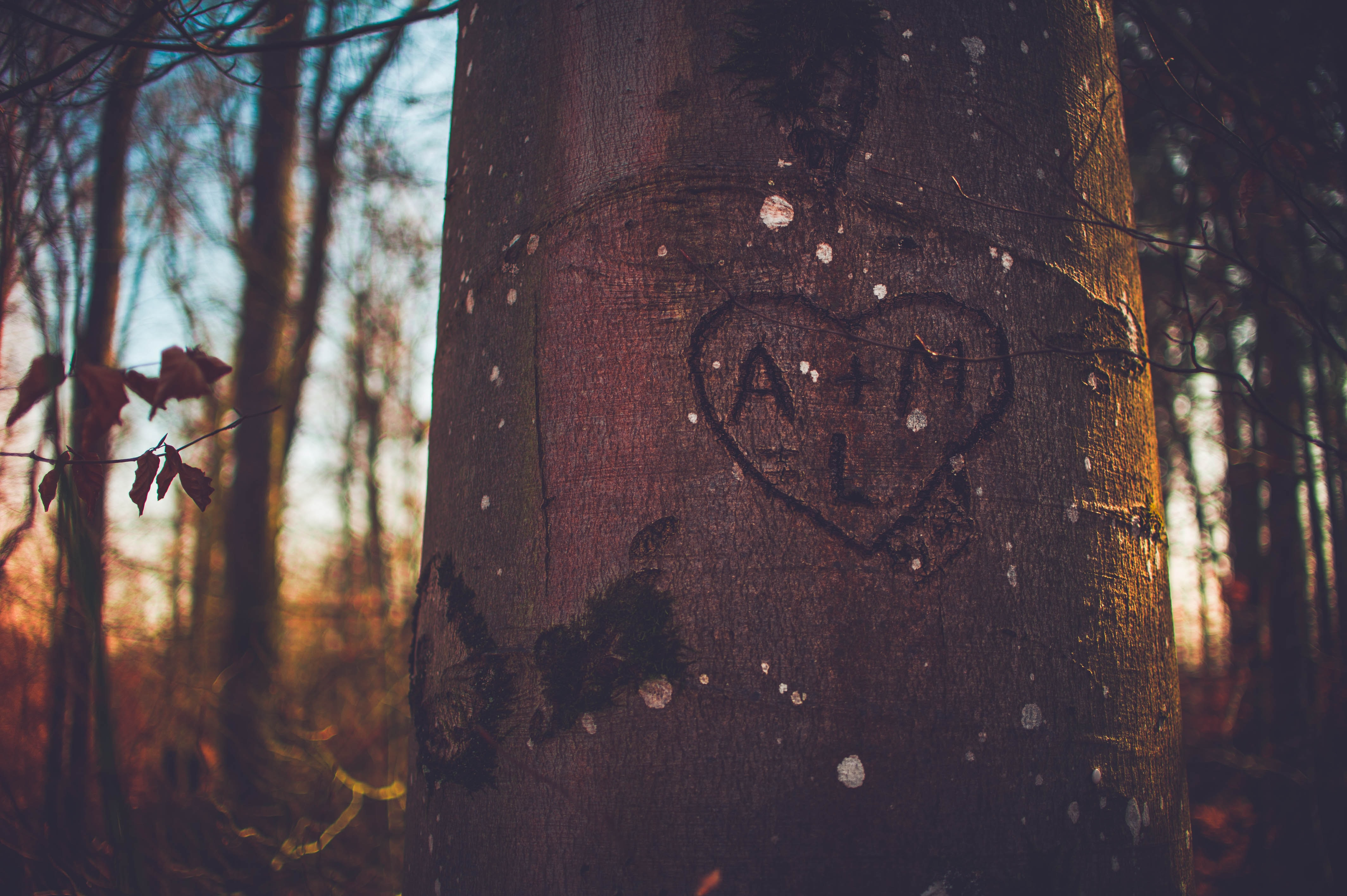The initials A + M are etched in a heart on a tree trunk in the woods