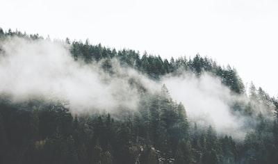 1216. Ködös tájakon