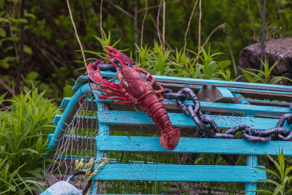 red lobster on green cage near green grass