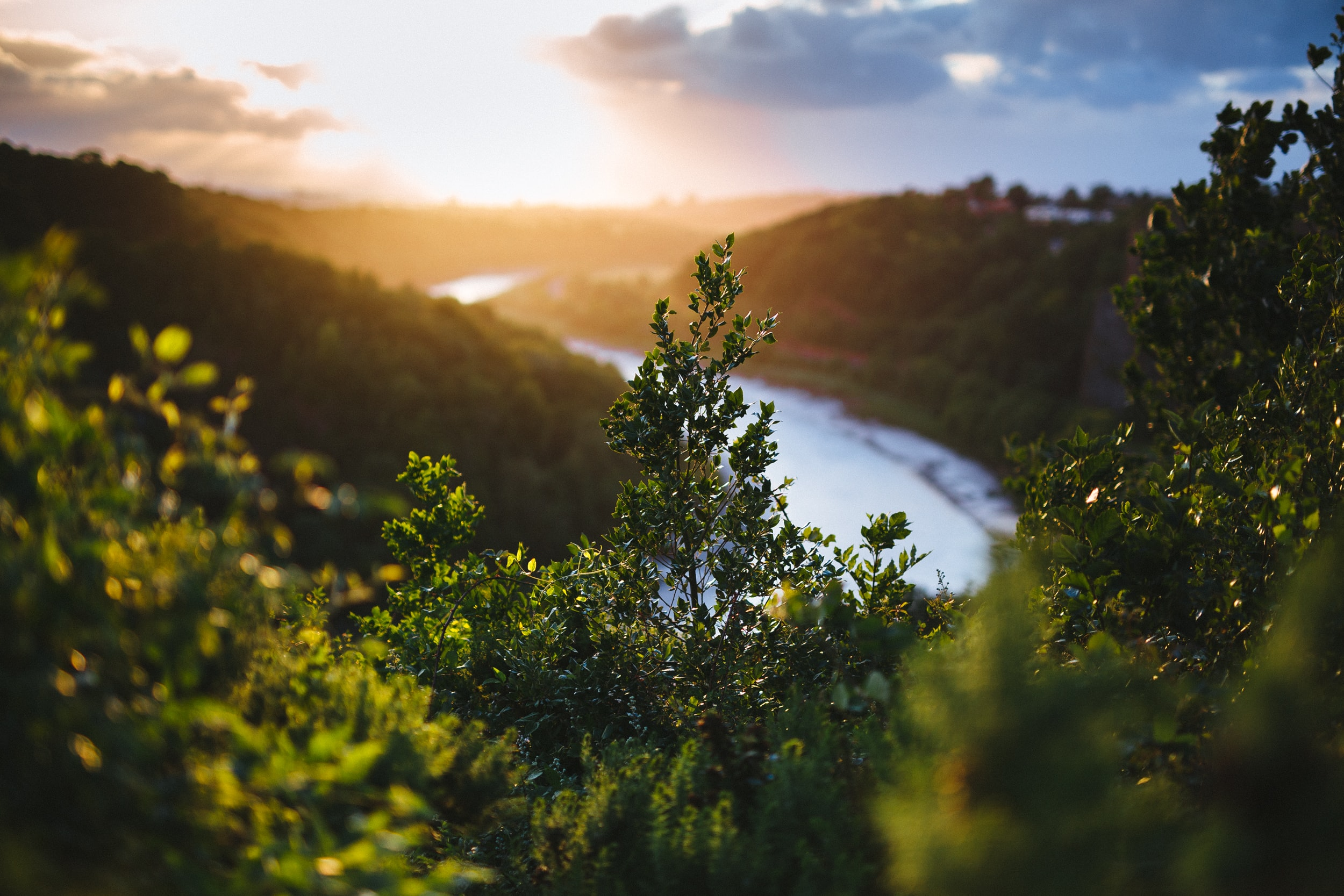 A sunset over a river and forest with bright green leaves at the Clifton Suspension Bridge