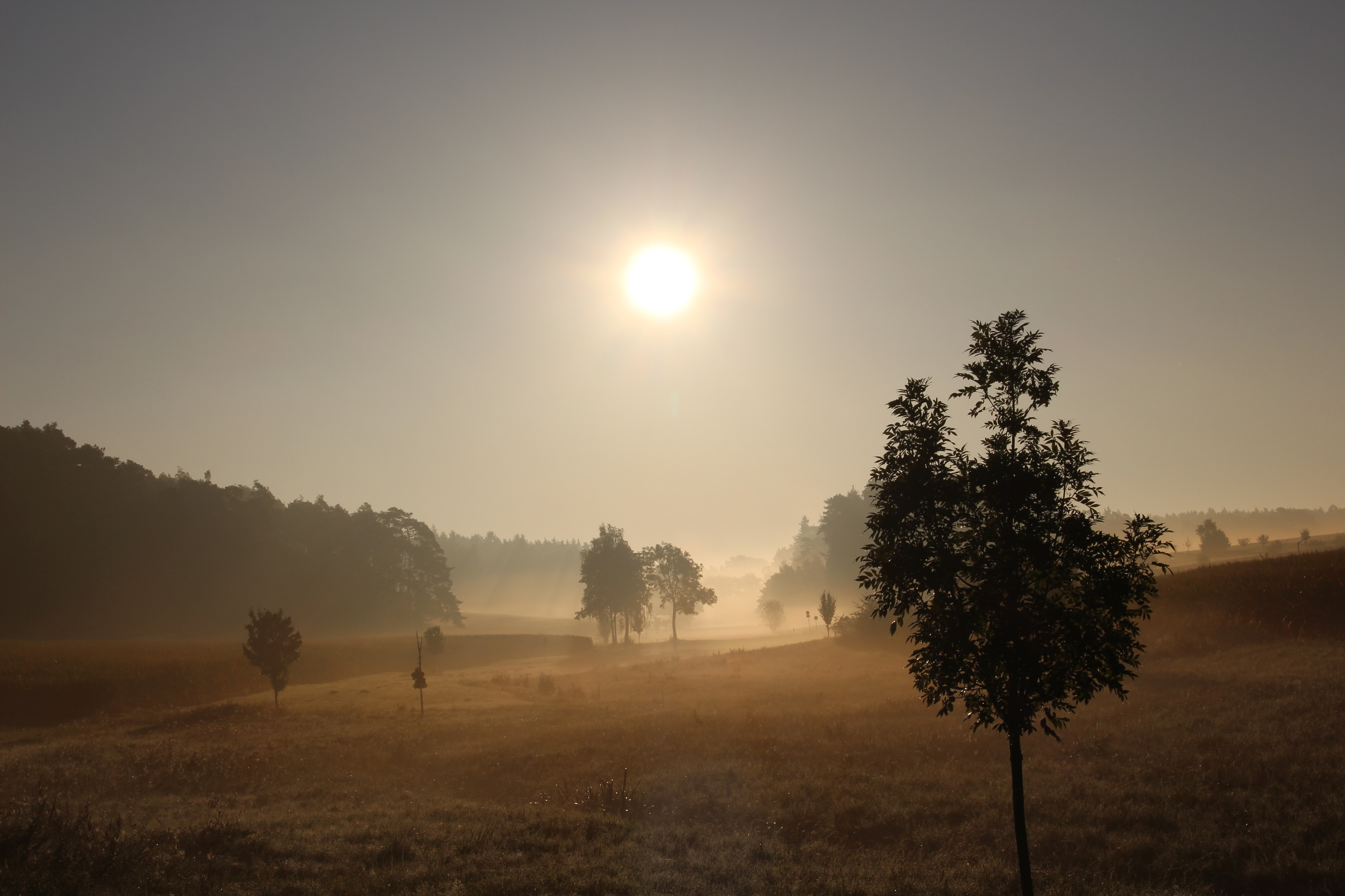 Bright sun in the sky over a hazy field with sparse trees