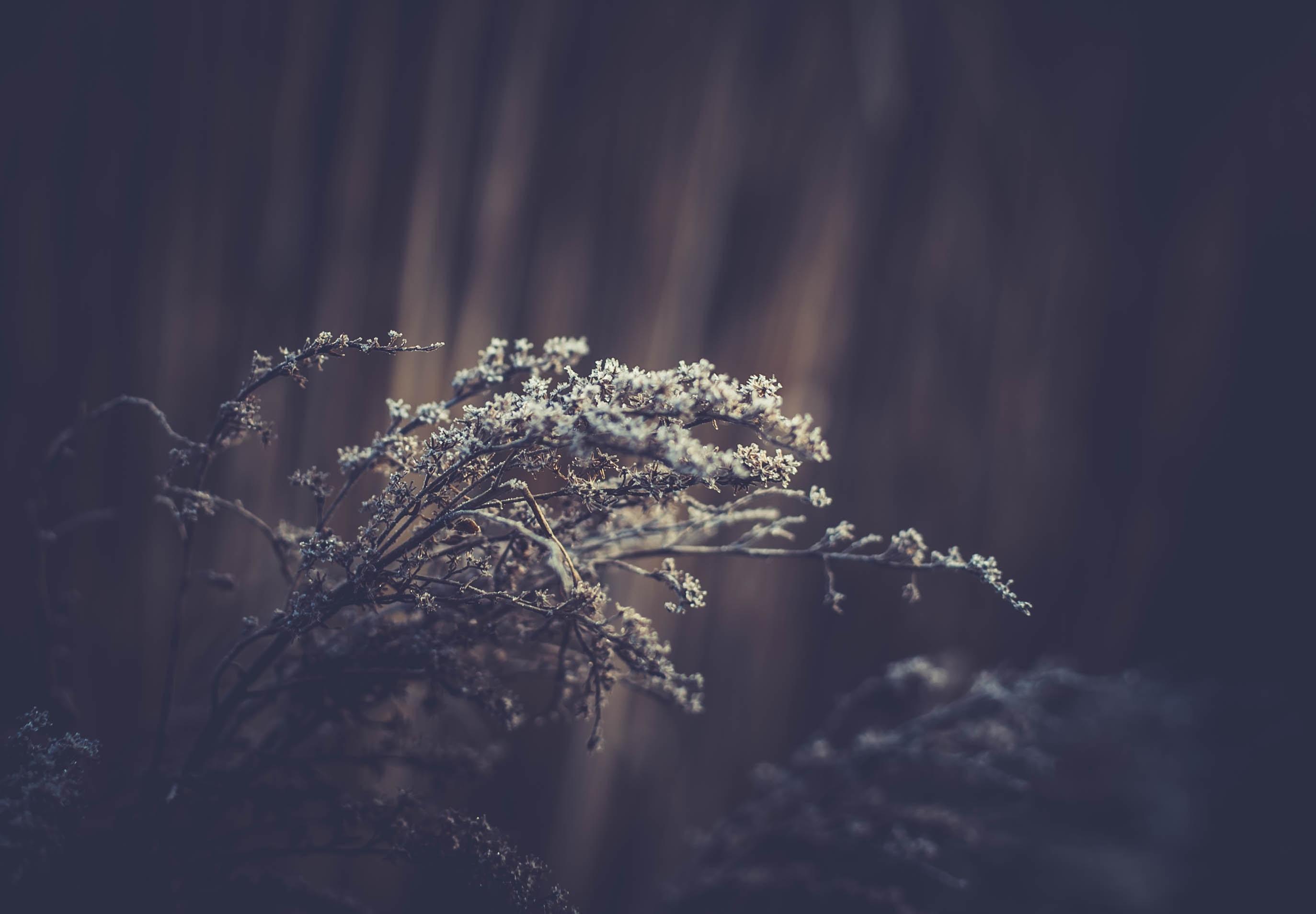 green leafed tree in tilt shift lens photography