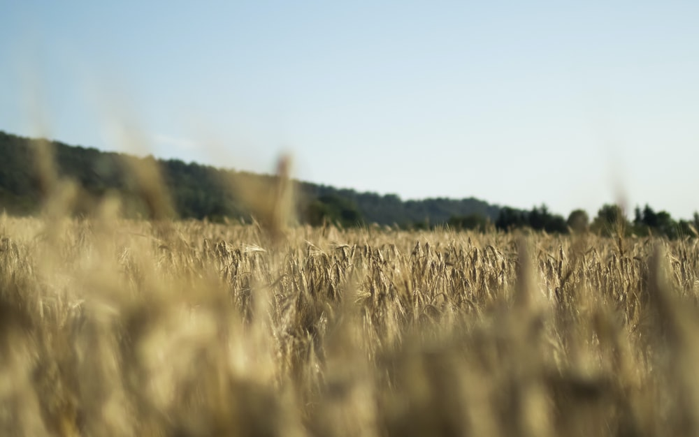 brown grass field at daytime