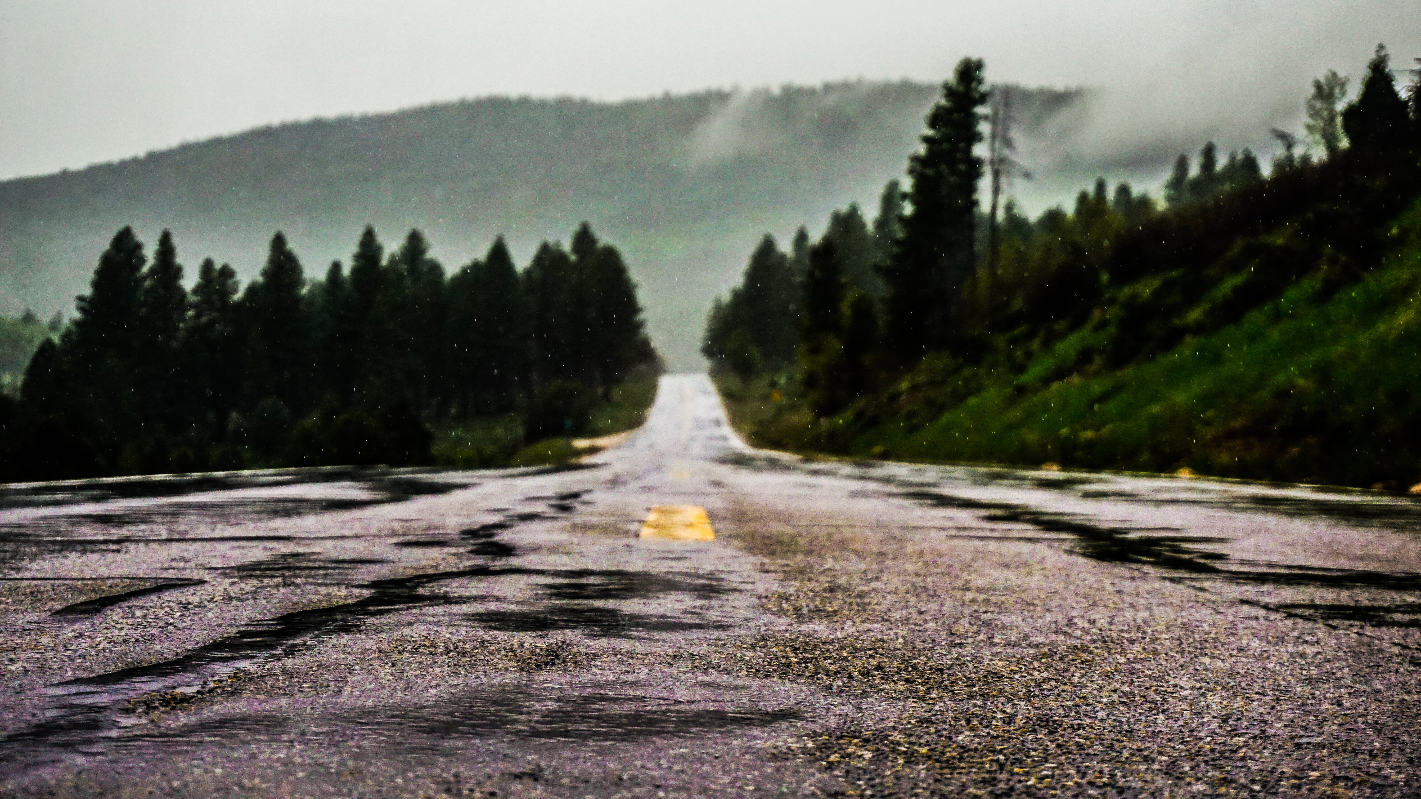 A low shot of a wet asphalt road lined with evergreen trees