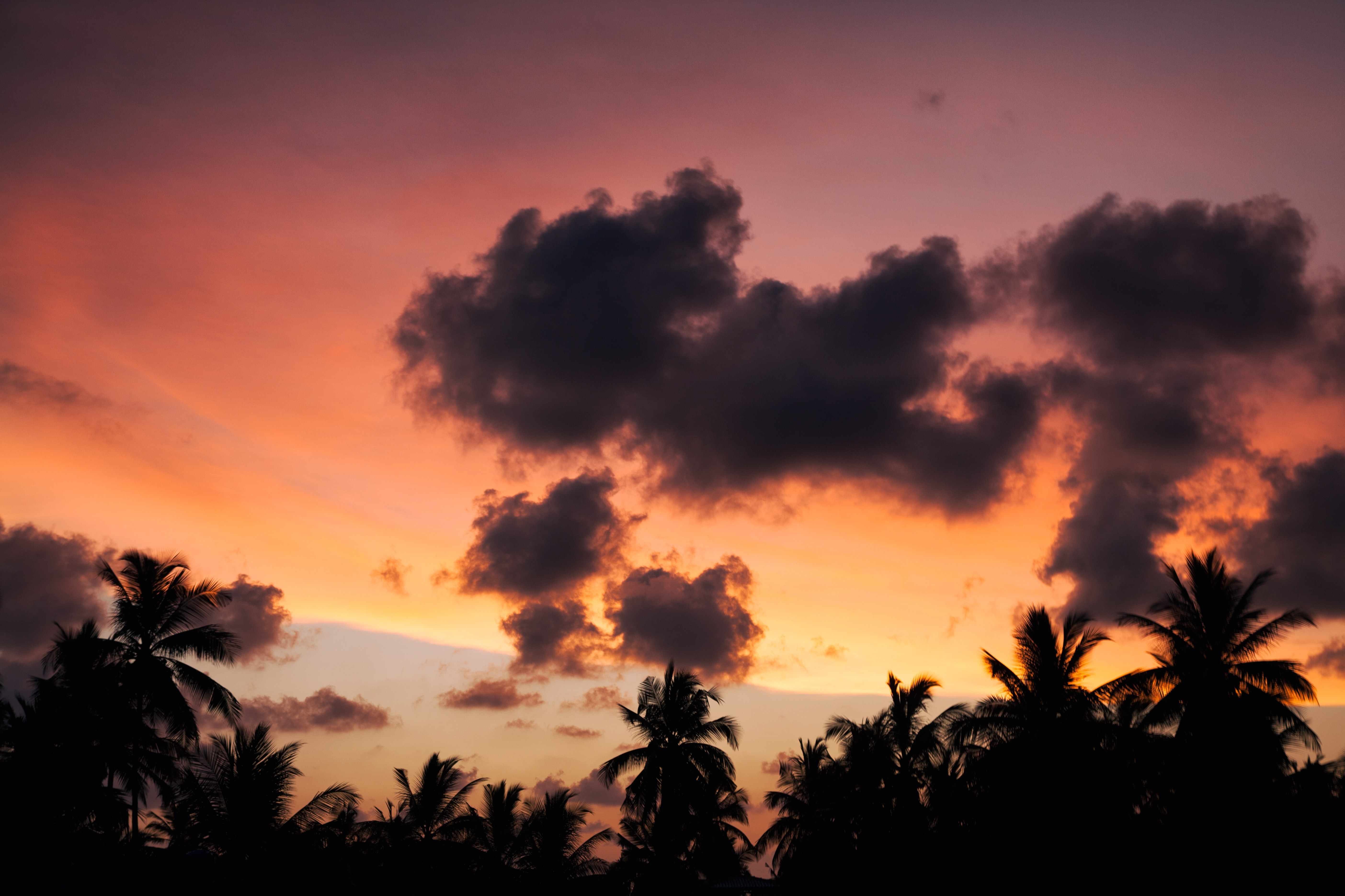 Colorful sky above the palm tree treetops during sunset at Unawatuna beach