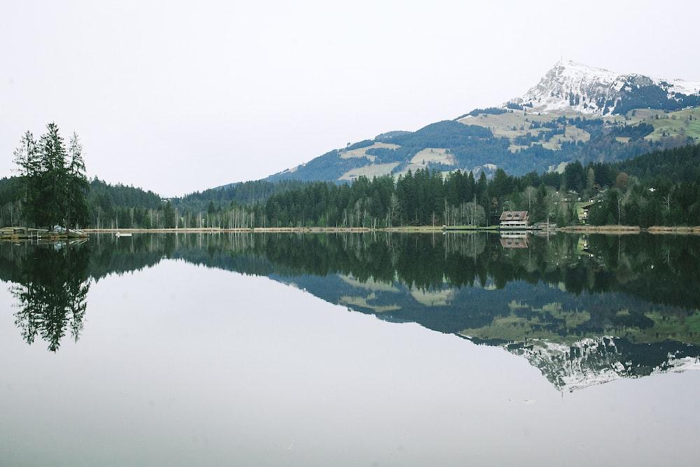 landscape photo of a lake beside trees