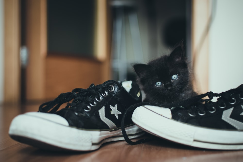pair of black-and-white low-tops