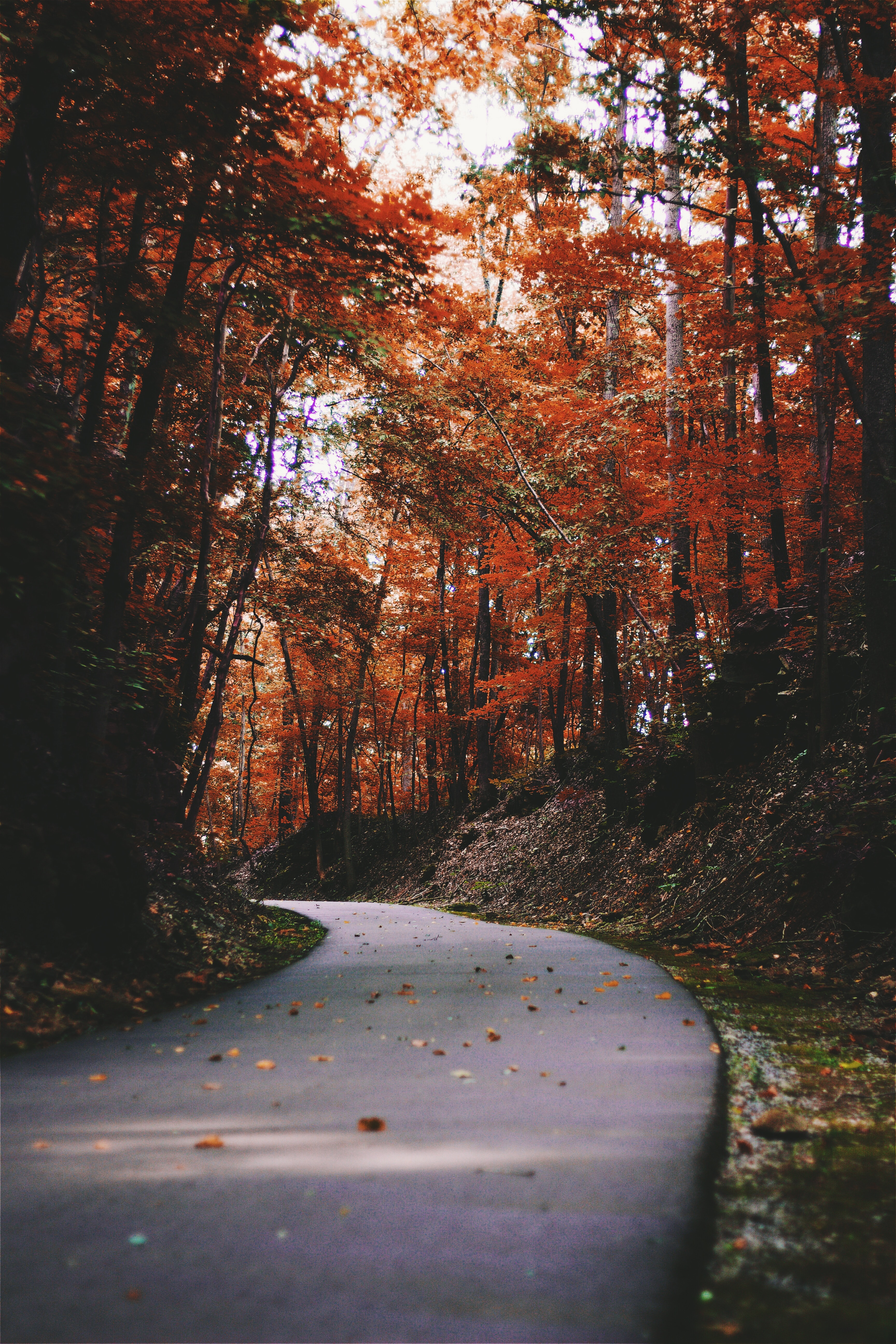 The First Night of Autumn fall stories