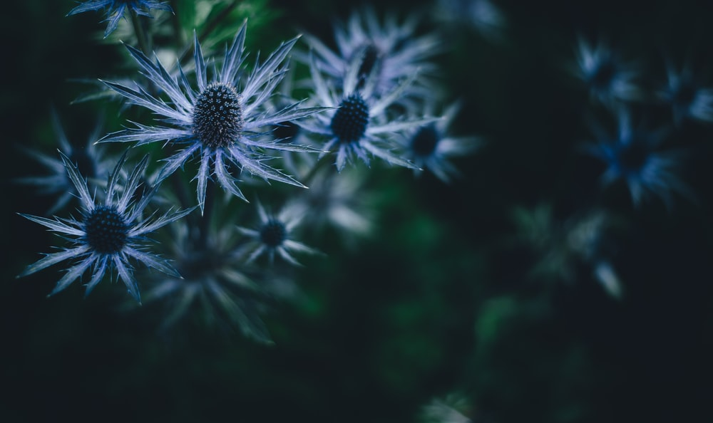 close-up photography of blue and gray petaled flowers