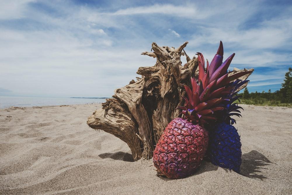 maroon pineapple near log on beach under blue and white skies