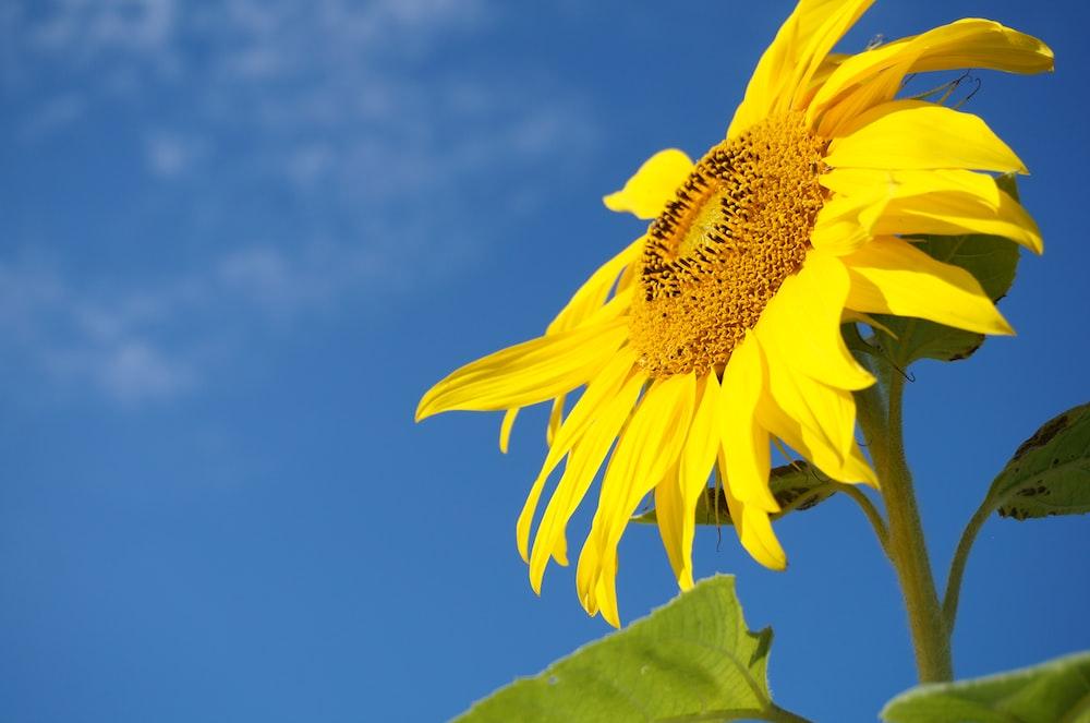 shallow focus photography of yellow sun flower