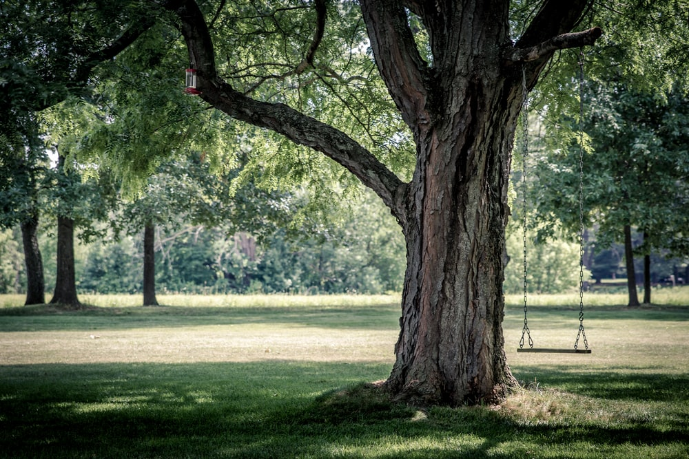 photo of swing chair on tree