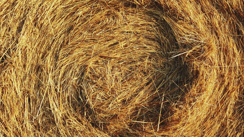 closeup photo of hay bale