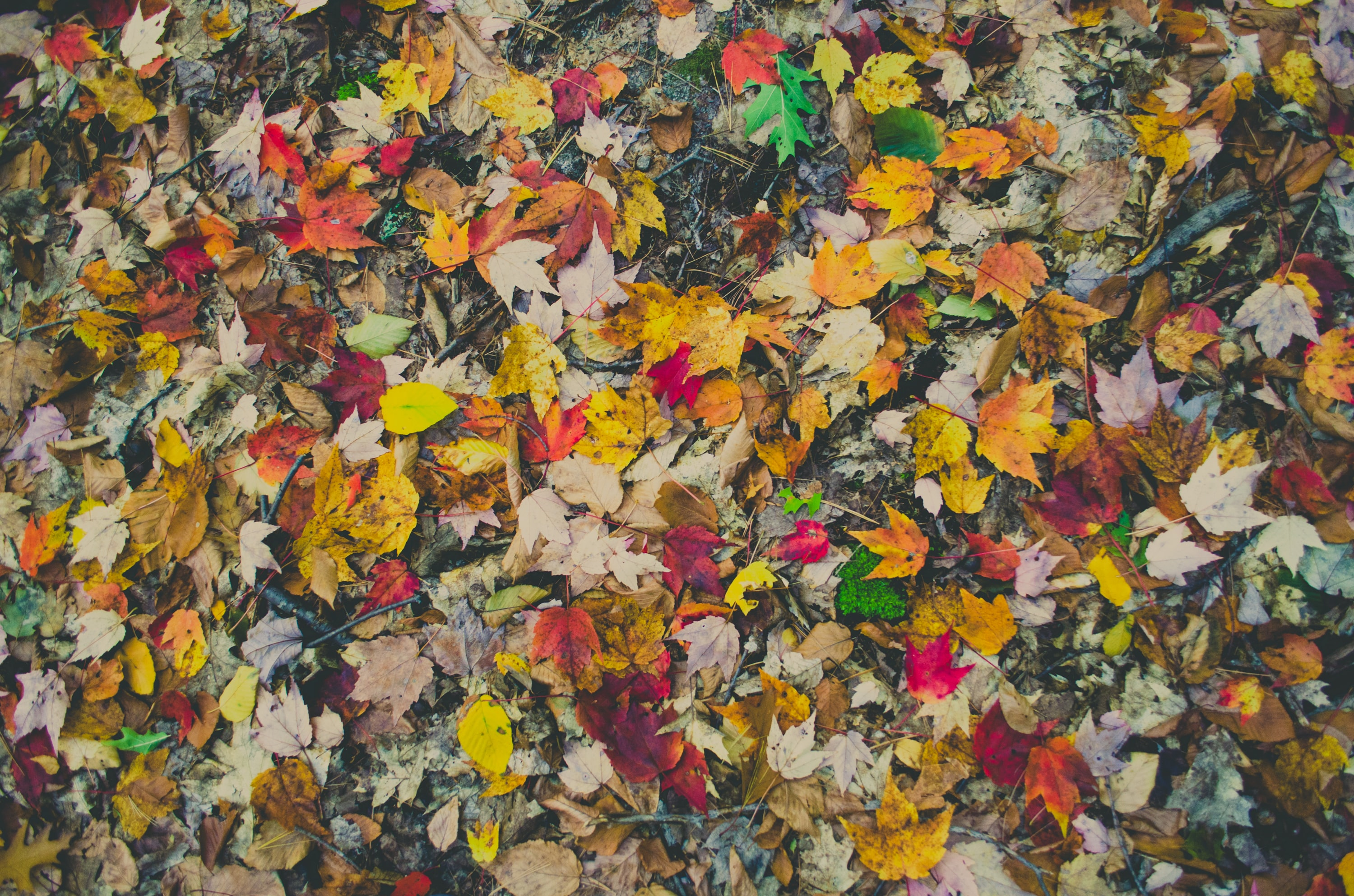 assorted-color leaves on ground