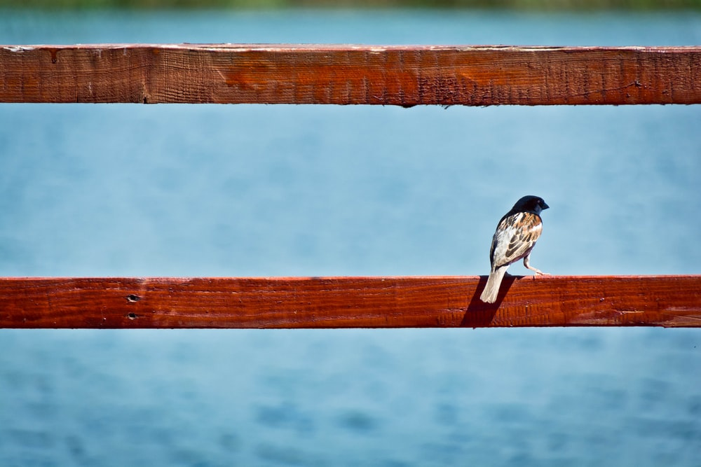 brown bird perched on red wooden railing