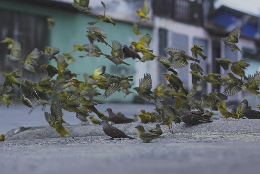 shallow focus photo of birds in flight