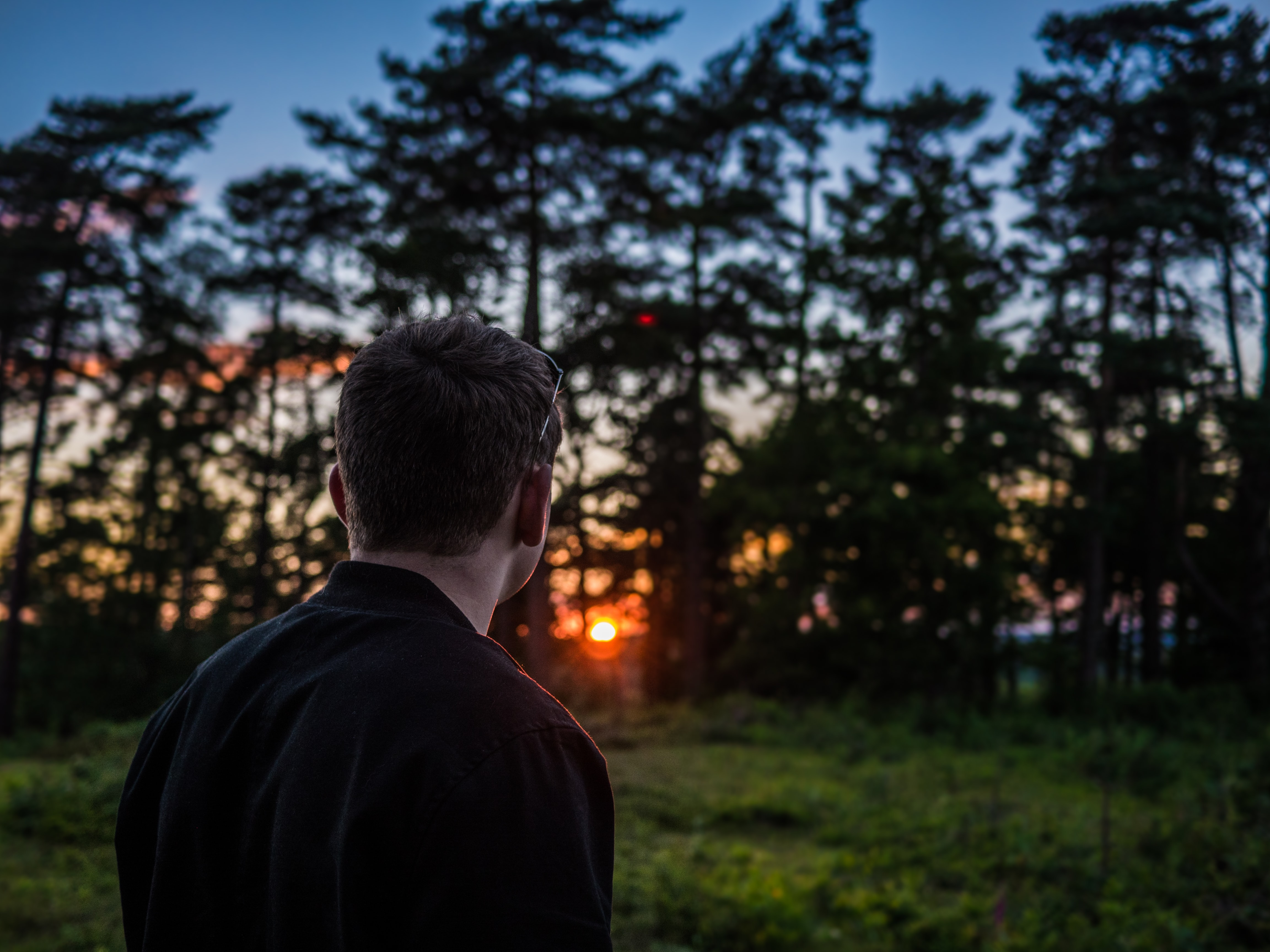 A man looking at the sunset behind a copse of trees