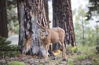 brown deer on forest