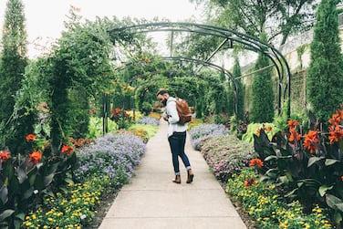 Bearded man walking through Cheekwood-Art & Gardens admiring the colorful  flowers and the lush