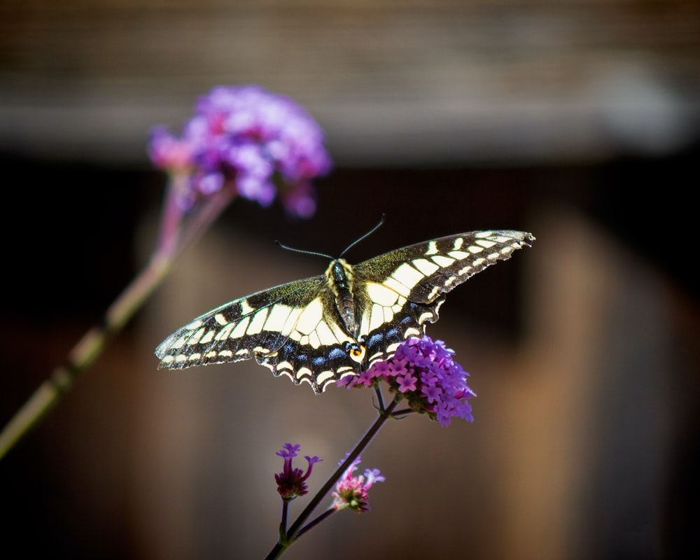 A small butterfly on a purple flower.