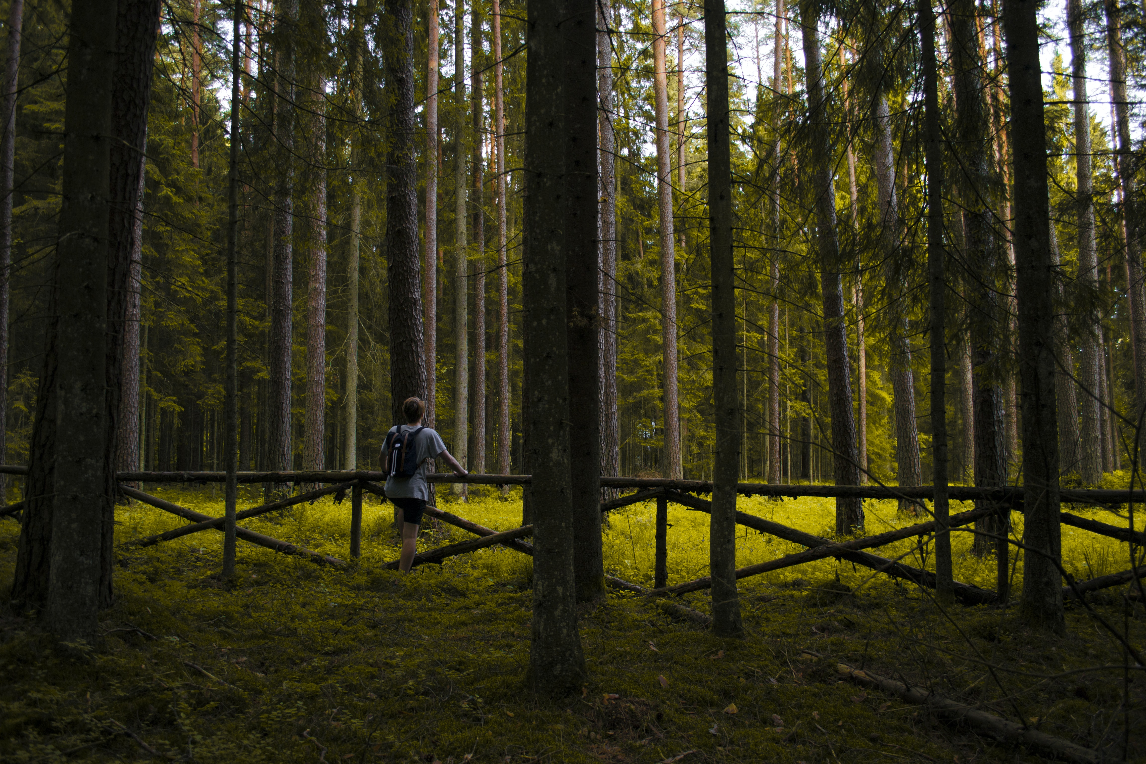 A person leaning forward against a small wooden fence in a forest